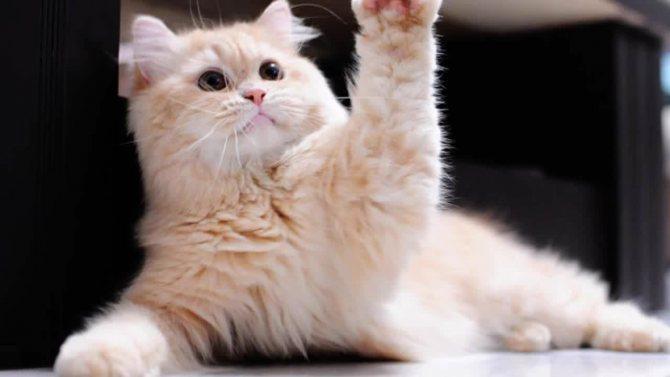 Язык кошек: переводчик с кошачьего
