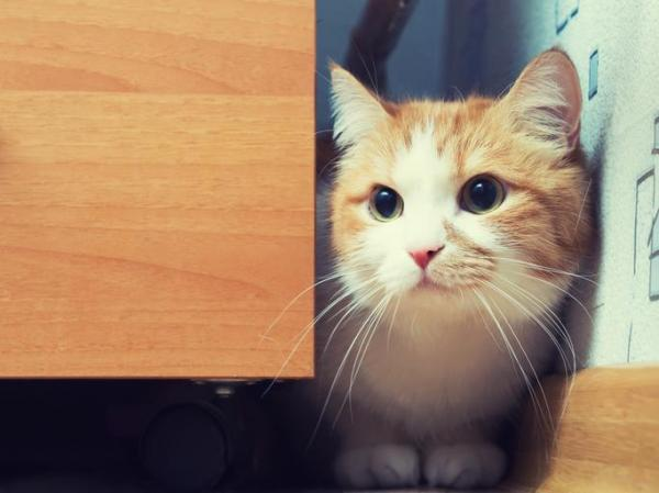 за углом кошка