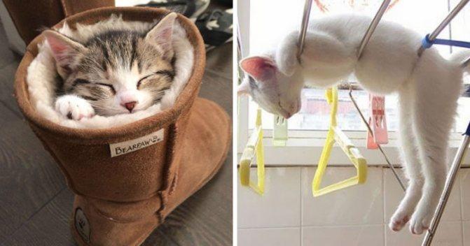 Забавные спящие коты