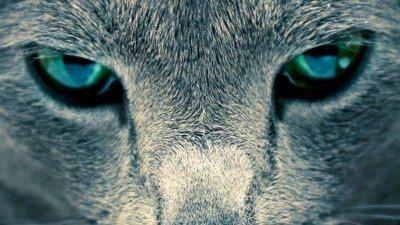 заболевания глаз делятся на воспалительные и невоспалительные