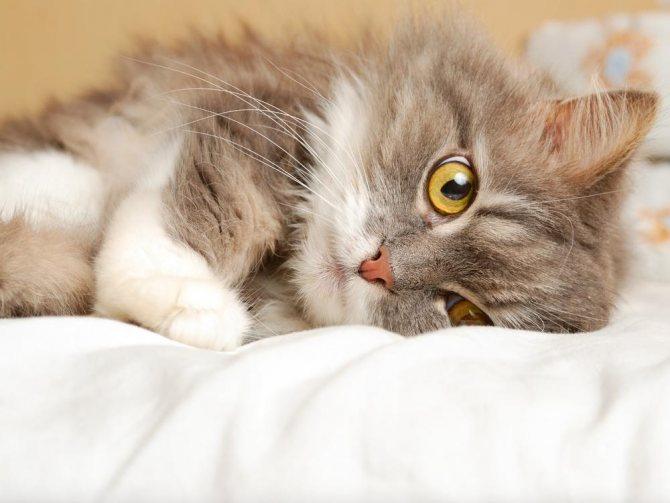 Зачем глистогонить кошку