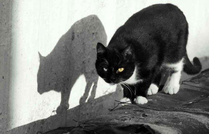 Зачем кошке подушечки на лапах