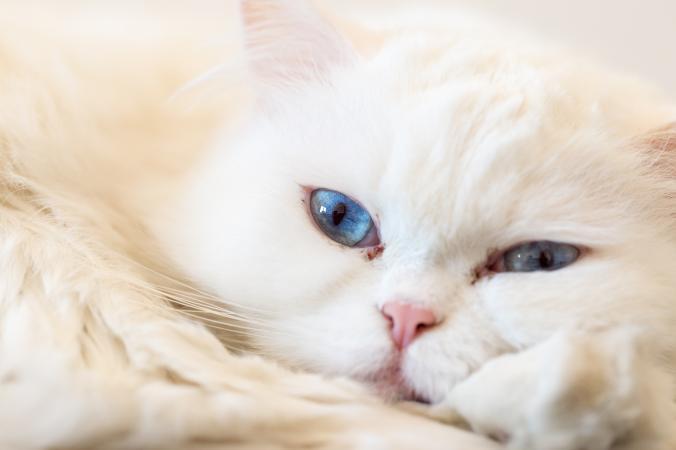 Зачем промывать глаза кошке
