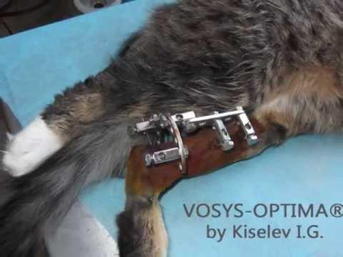 Закрытый перелом задней лапы у кота. - YouTube