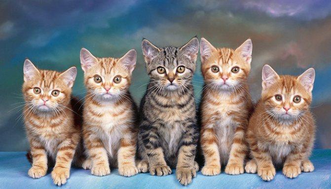 Замена препаратов у кошек