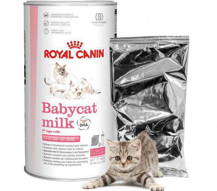 заменитель кошачьего молока инструкция