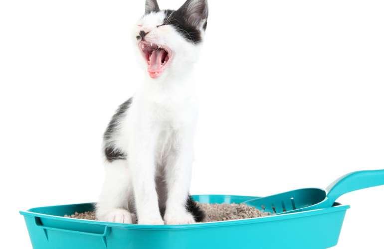Запор у котов и кошек