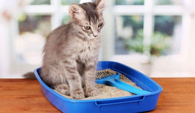 Запоры у кошек и их лечение
