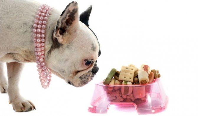 zapreshhennye produkty frenchu - Чем кормить французского бульдога: щенка, взрослую собаку