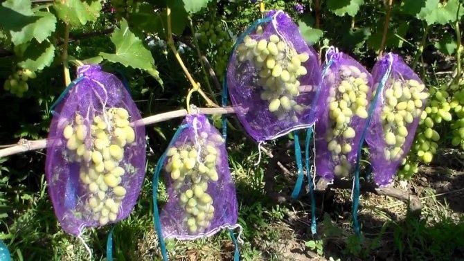 Защитные колпаки для гроздей