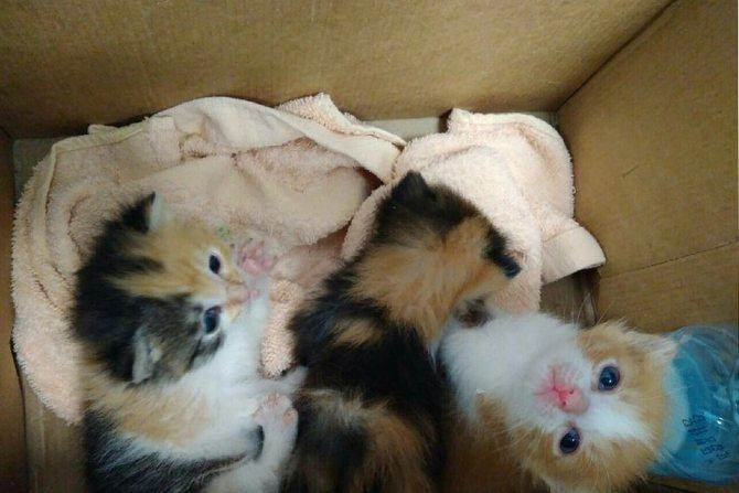 Желательно держать котят в коробках или ящиках, через которые они не могли бы переползти