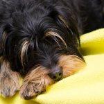 Желтая рвота у собаки