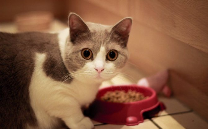 Животное рекомендуется кормить кормом только одного производителя