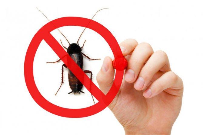 жизнь без тараканов