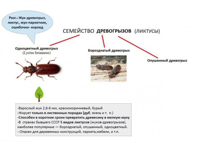 Жучки которые едят дерево