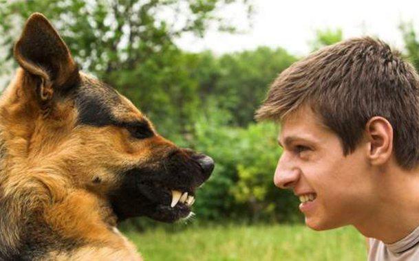 Злому хозяину животное будет отвечать аналогично