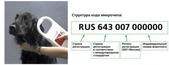 Значения цифр при чипировании