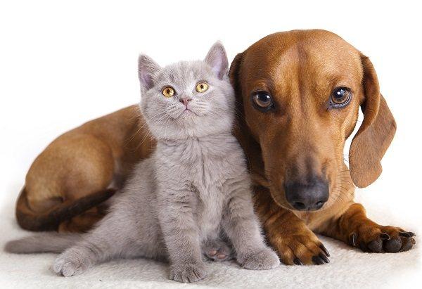 Знакомство с семьёй и домашними животными