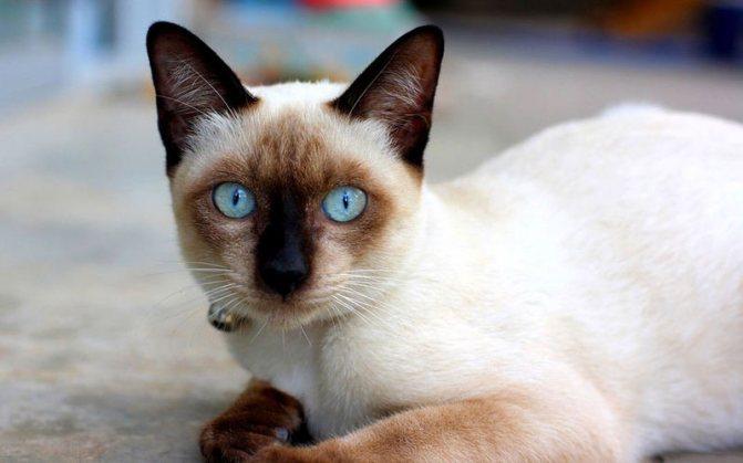 Зодак для кошек от аллергии дозировка — Сайт про собак