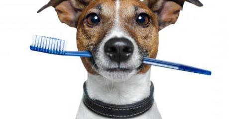зубная паста для собак мелких пород