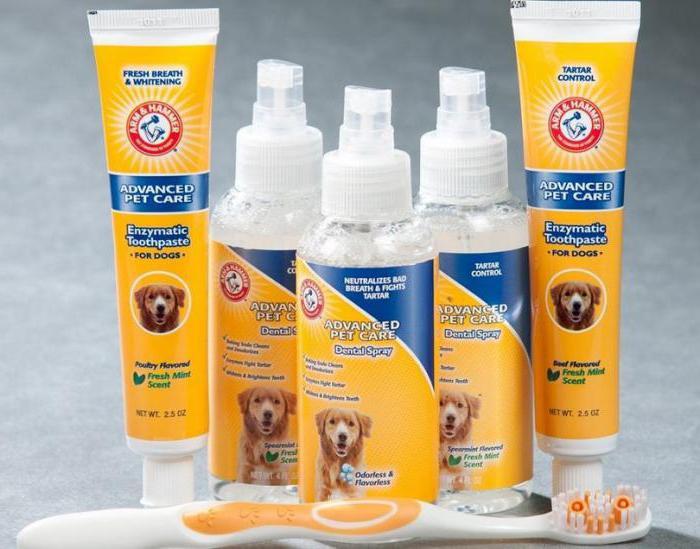 зубная паста для собак