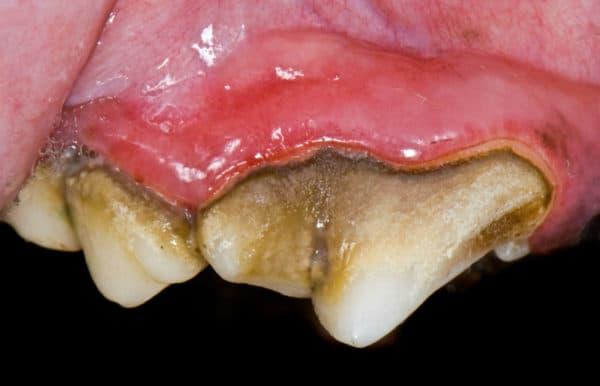 Зубной камень у котов