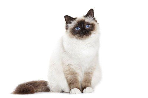 Зуд у кошек причины лечение